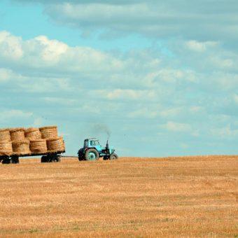 Corso per il Diploma di Perito in Agraria in tutta Italia